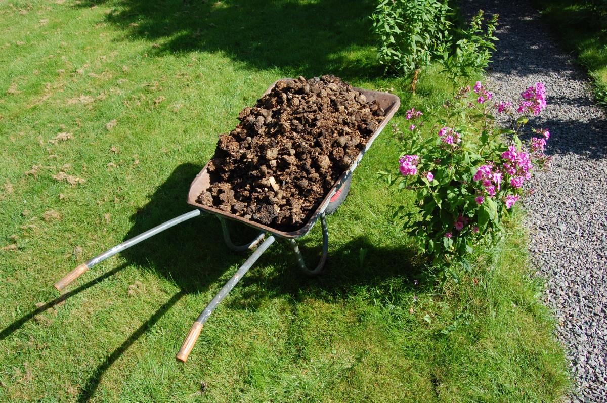 Naturgjødsel i hagen: Blomstene takker deg for hestebæsjen