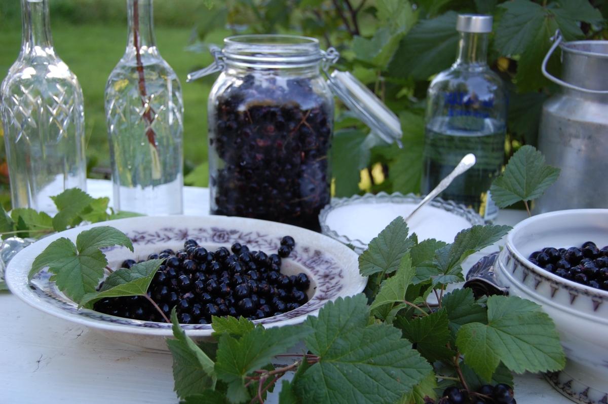 Oppskrift på solbærlikør: Likør av herlige solbær