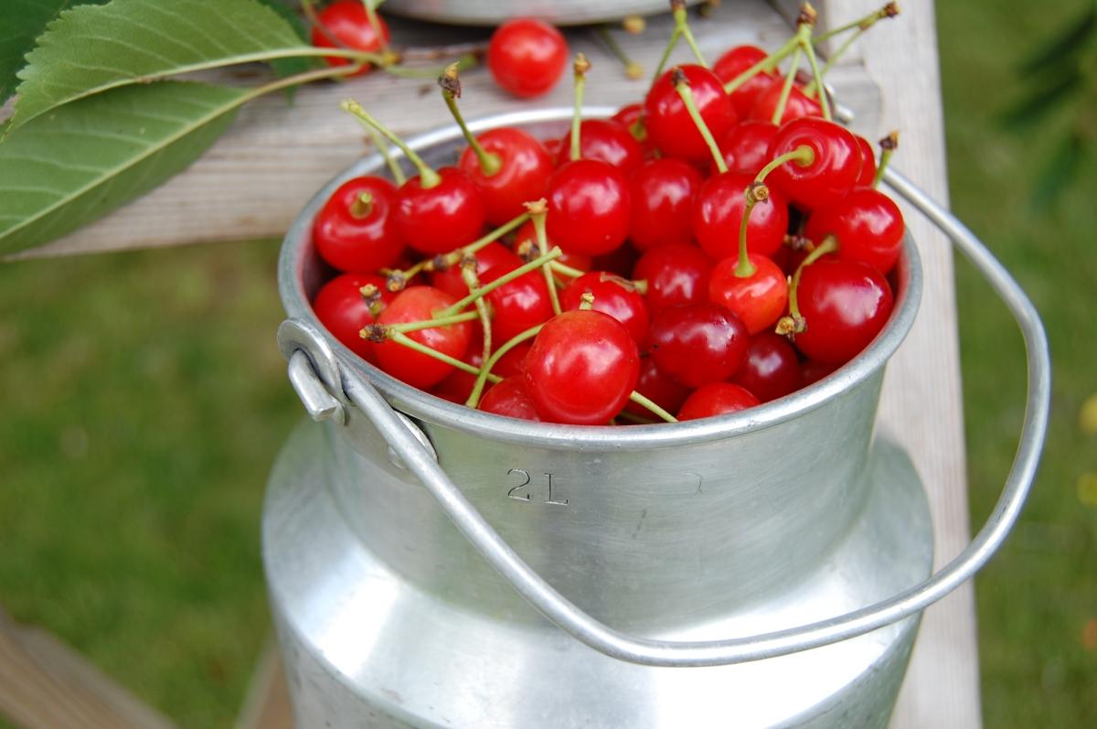Slik lager du kirsebærlikør